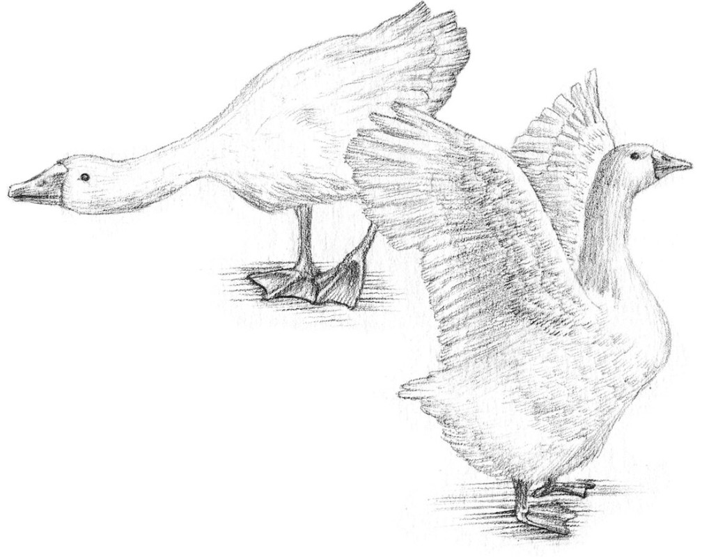 detail illustration canards